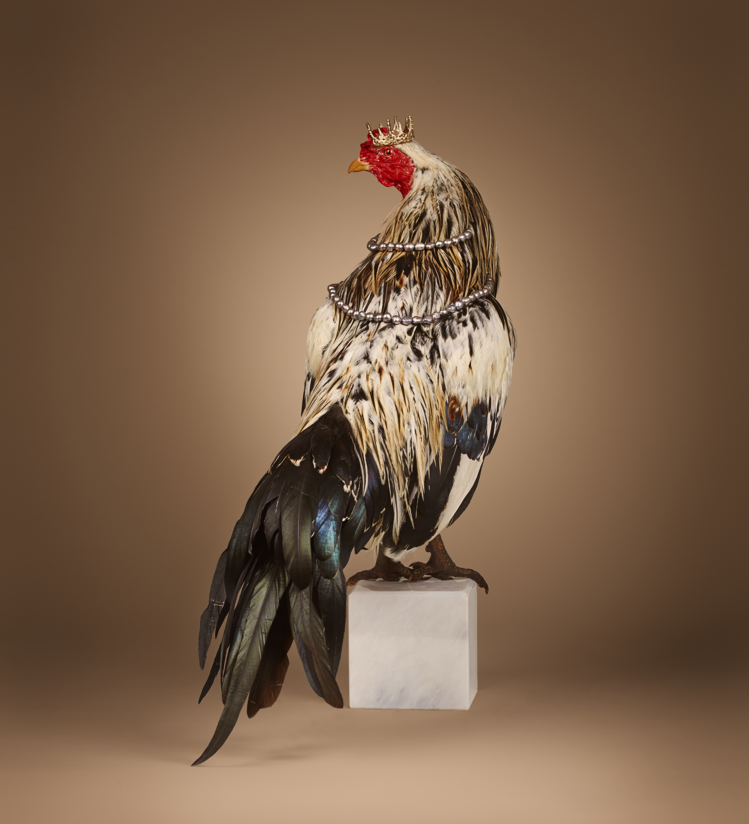 Rooster0304.png