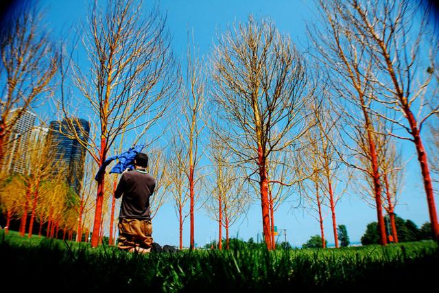 martin orange blue trees website