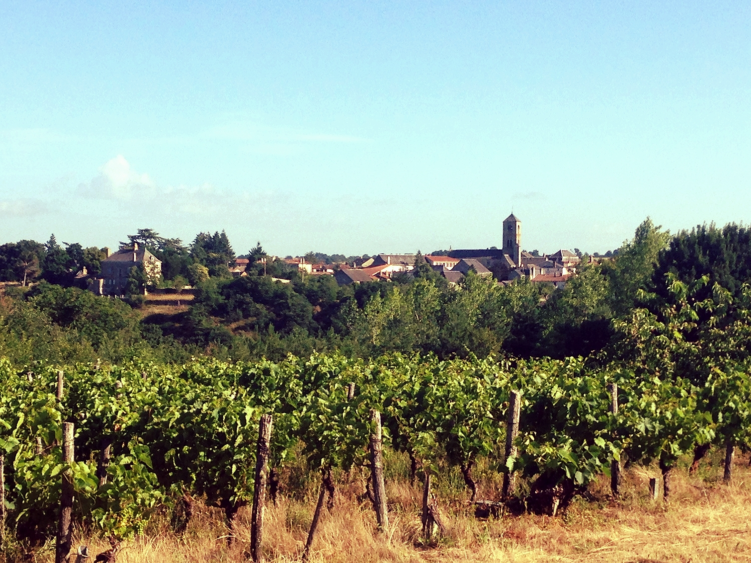 Distant view of Argenton-Chateau, taken with my iPhone from a walk through the neighboring vineyard and apple orchards.