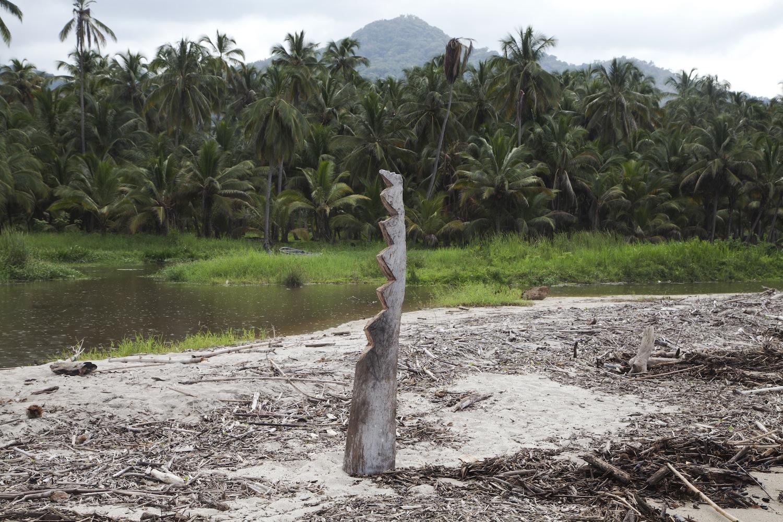 Between-jungle-and-ocean-sol-bailey-barker.jpg