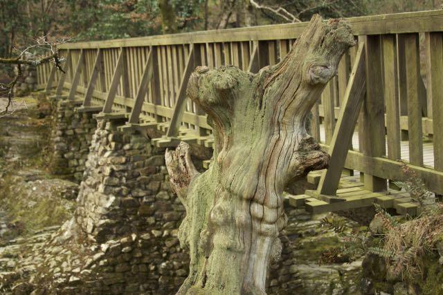 treebridge.jpg