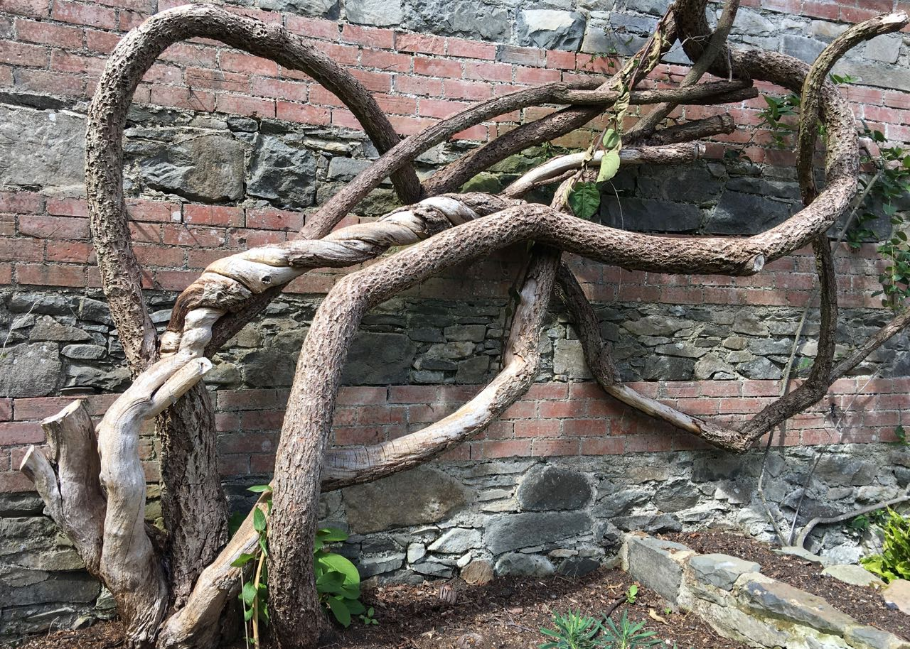- How old is old at Rowallane gardens with history rooted in the grounds