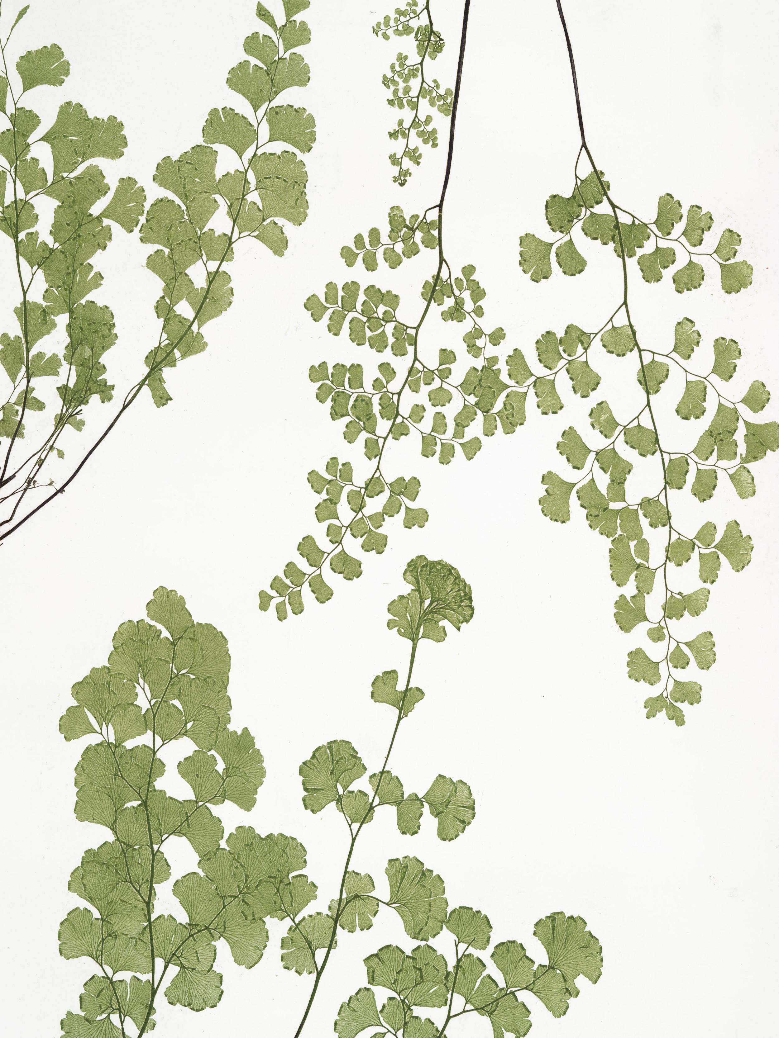 botanical_3.jpg