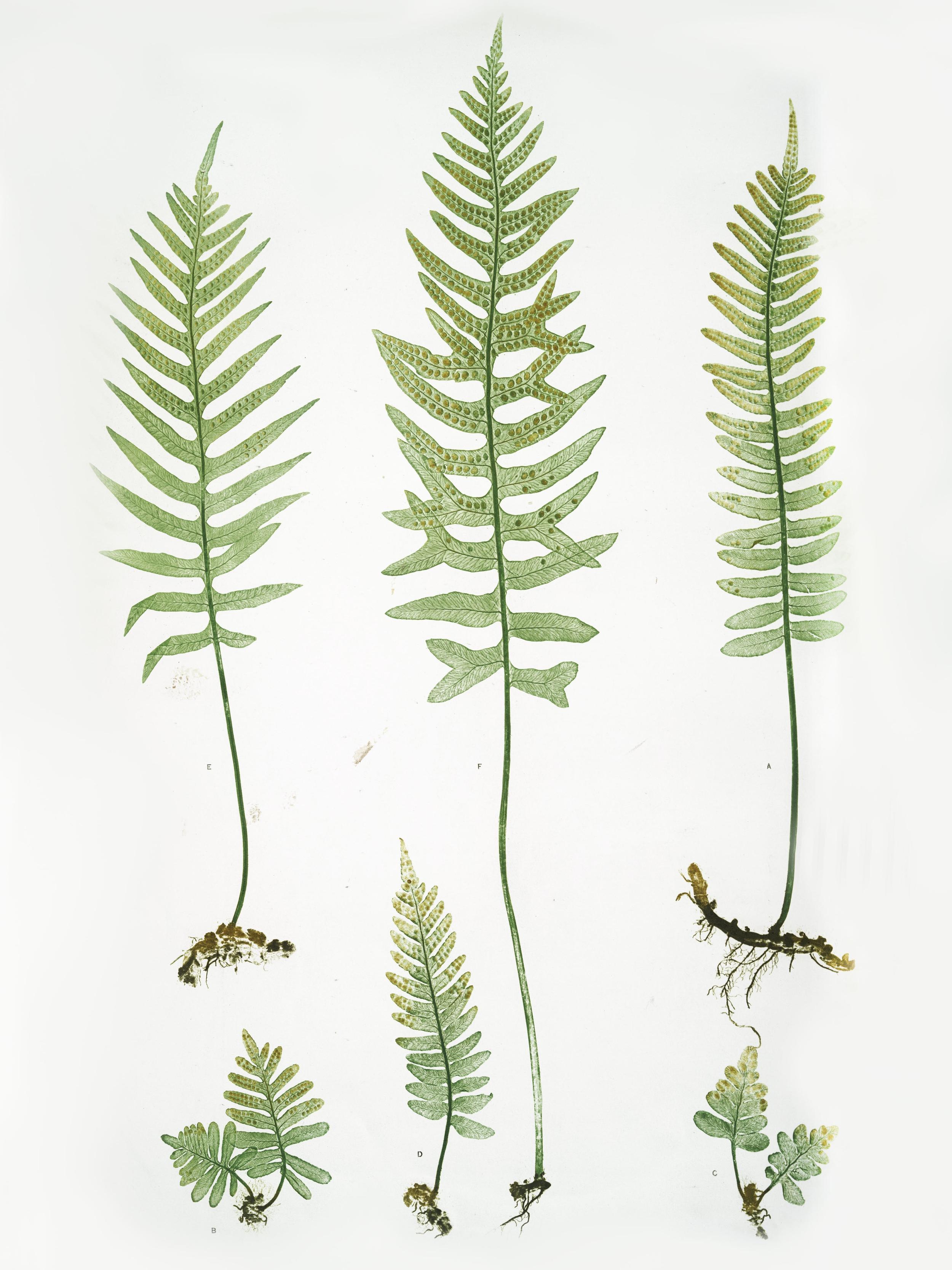 botanical_4.jpg