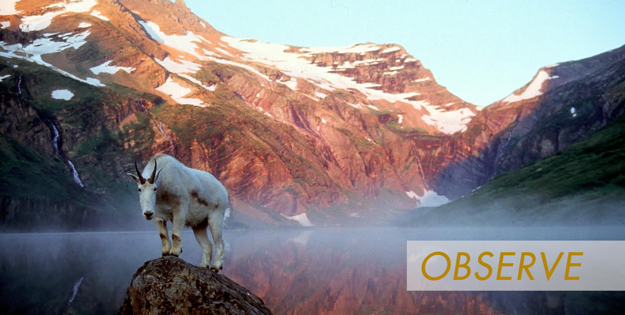 HP_Banner_Obsesrve.jpg