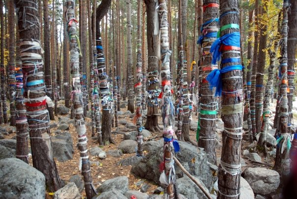 Buddhist prayer flags fly in a forest near Arshan.