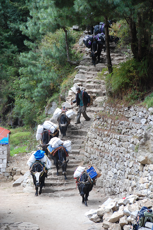 Brilliant stone work on trails used only by people and yaks