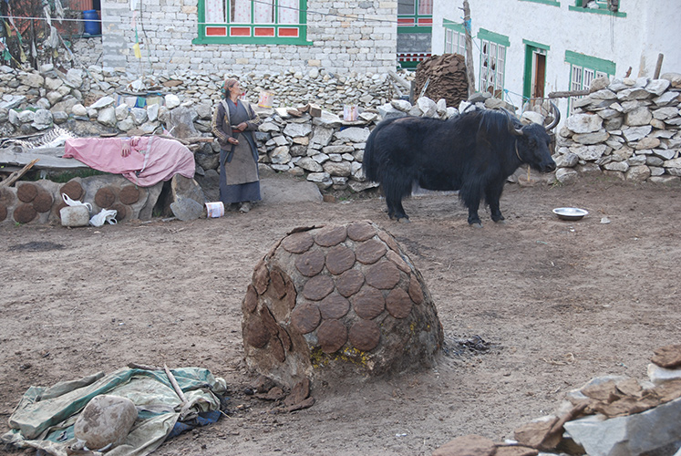 Patties of yak dung dry on a rock, to be used later as fuel in Sherpa stoves