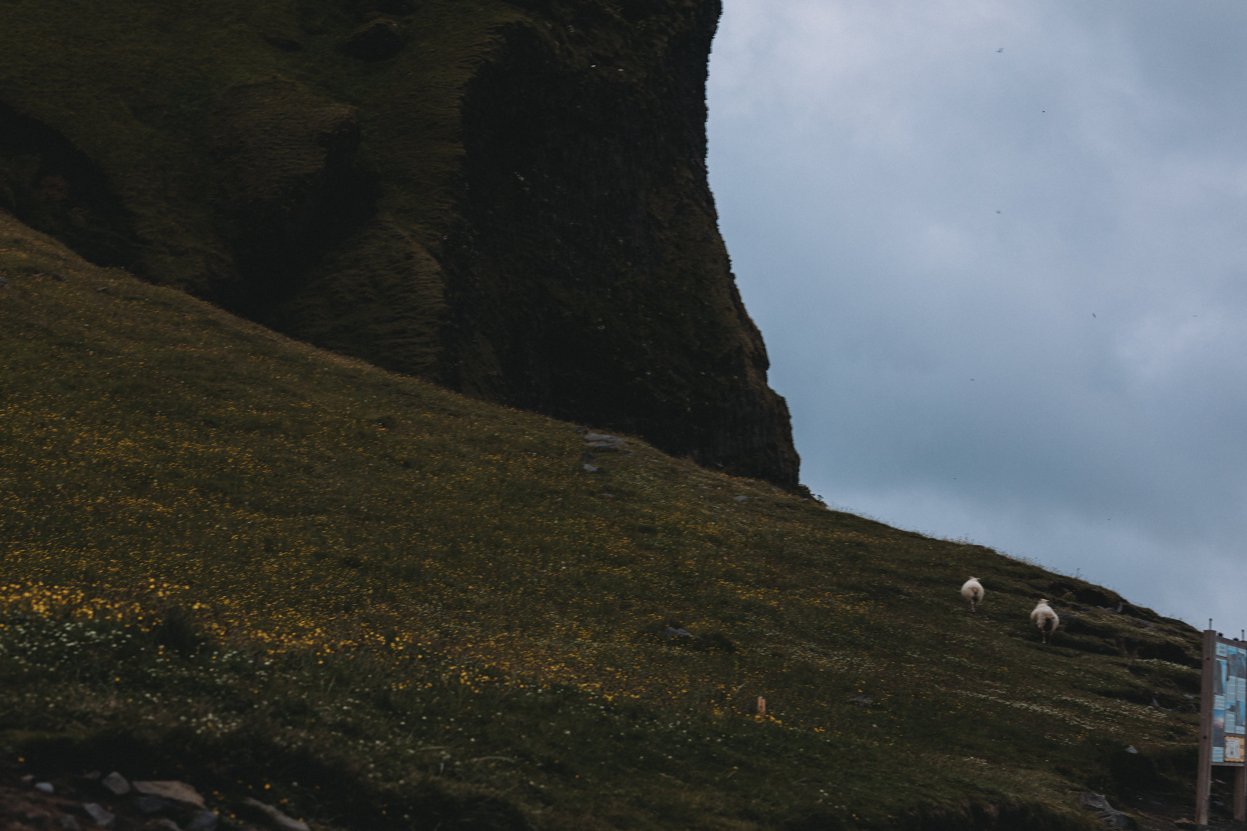 ICELAND_PROPOSAL_SOUTHCOAST-195.jpg