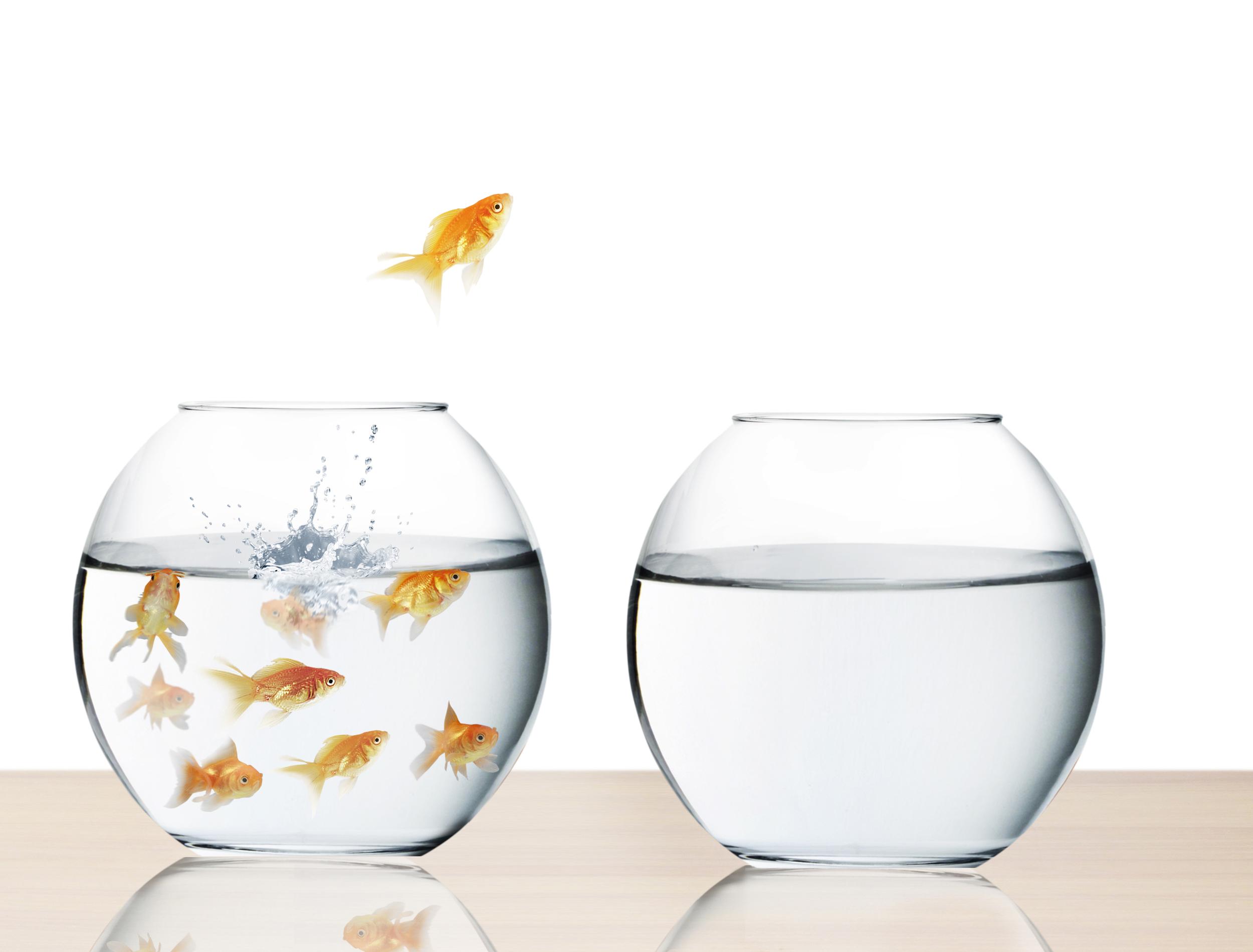 goldfish-homepage.jpg