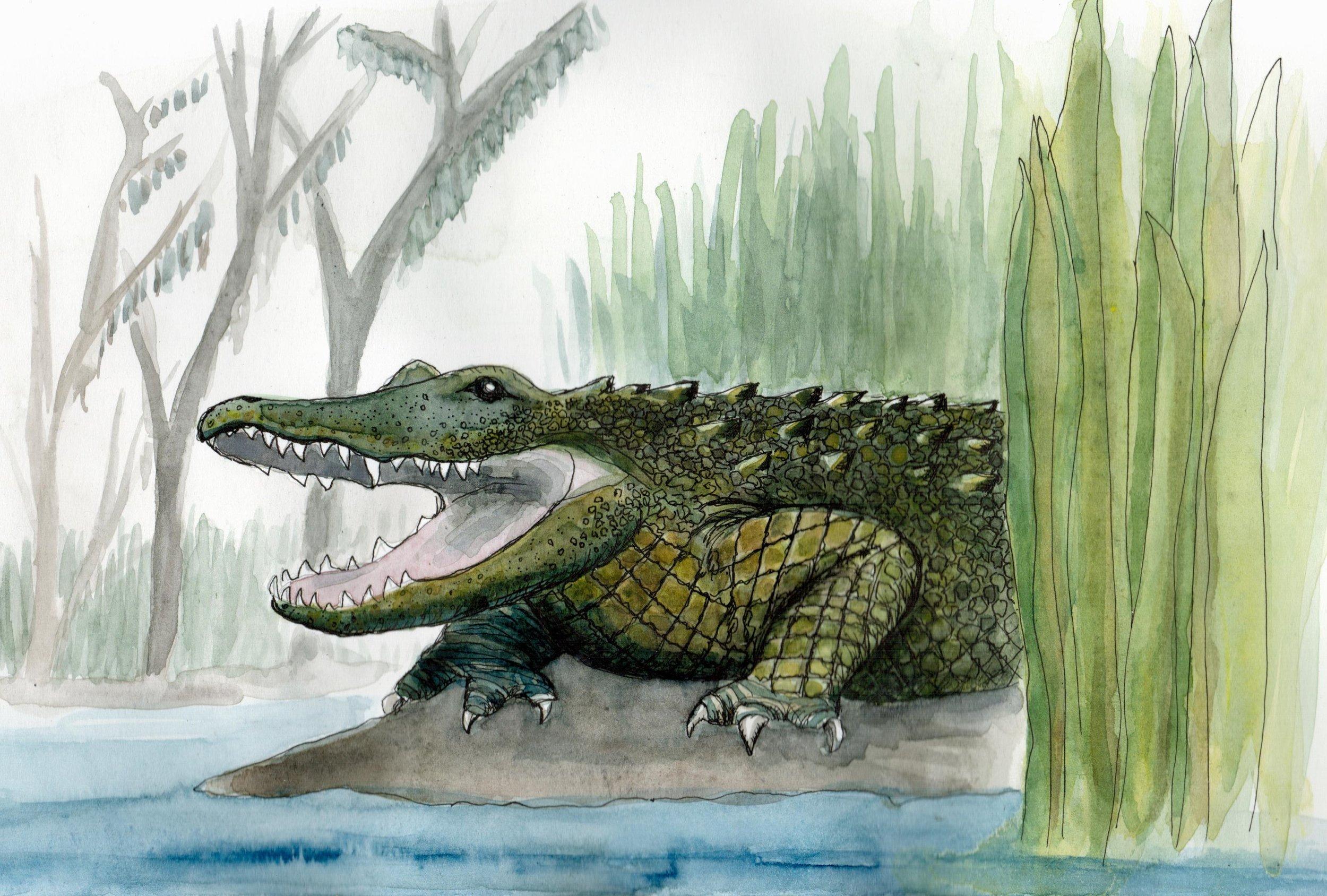 alligator_study.jpg
