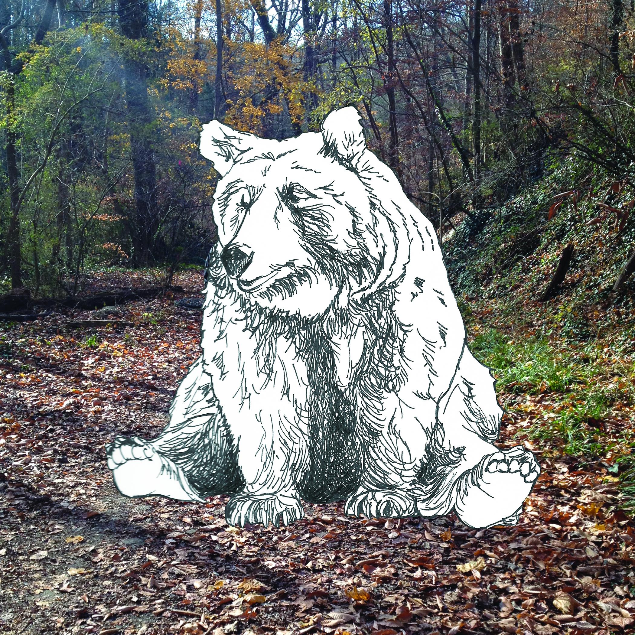 Chestnut the bear
