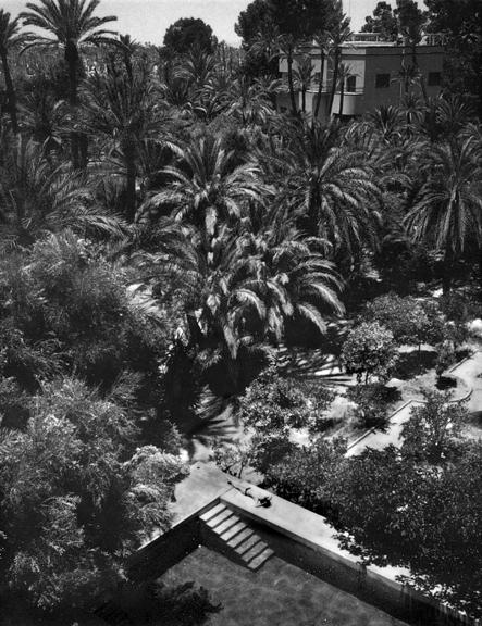 marco_guerra_bled_roknine_Palmeraie_alaoui_marrakech_15.jpg