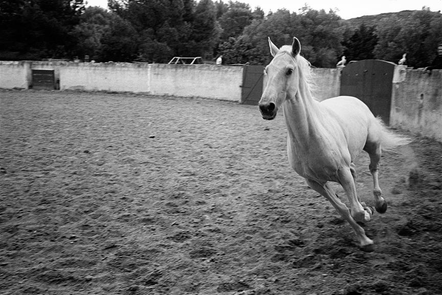 marco_guerra_south-of_france_patricia_pellen_horse_france_12.jpg