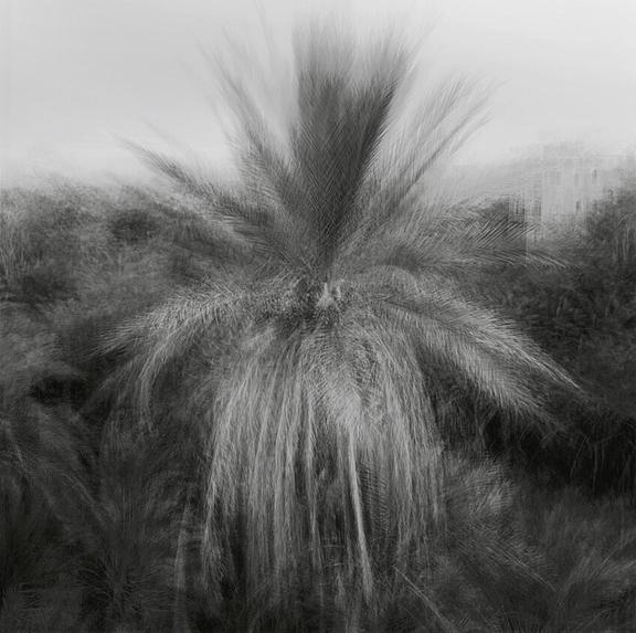 Bled Roknine palm
