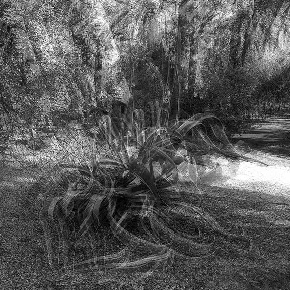 Bled Roknine Cacti