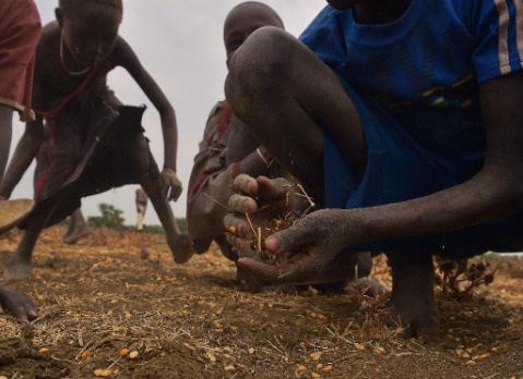 Children gather grain spilled from bags busted open following a food-drop on February 24, 2015 at a village in Nyal, near the northern border with Sudan (AFP Photo/Tony Karumba)