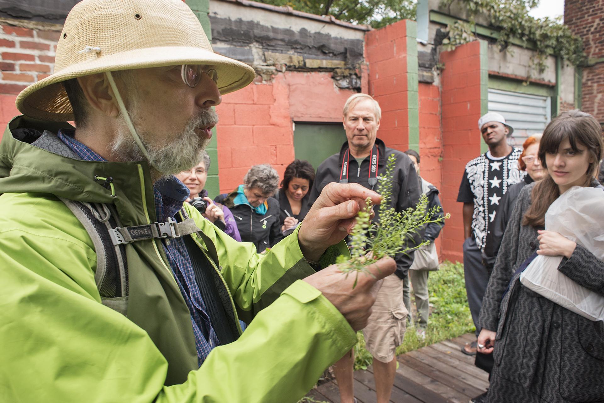 Harvesting, Cooking, Eating Wild Plants Workshop