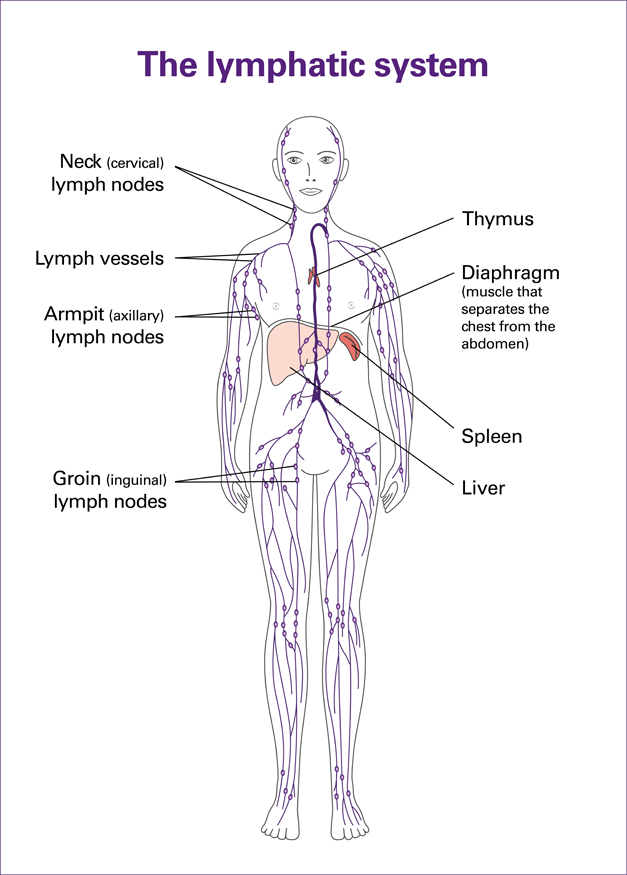 lymphatic-system map.png