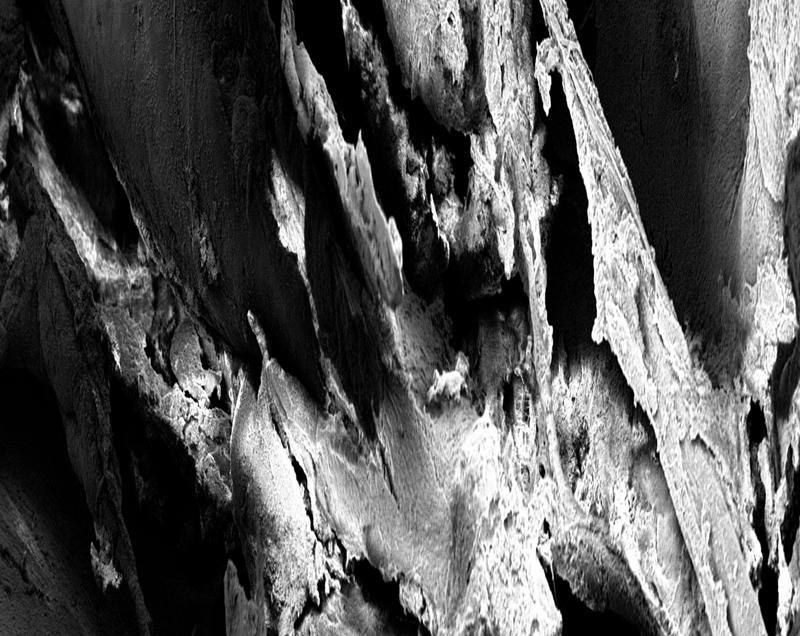 Patricia-Olynyk_Sensing-Terrains_NAS_09_Smell_detail.jpg