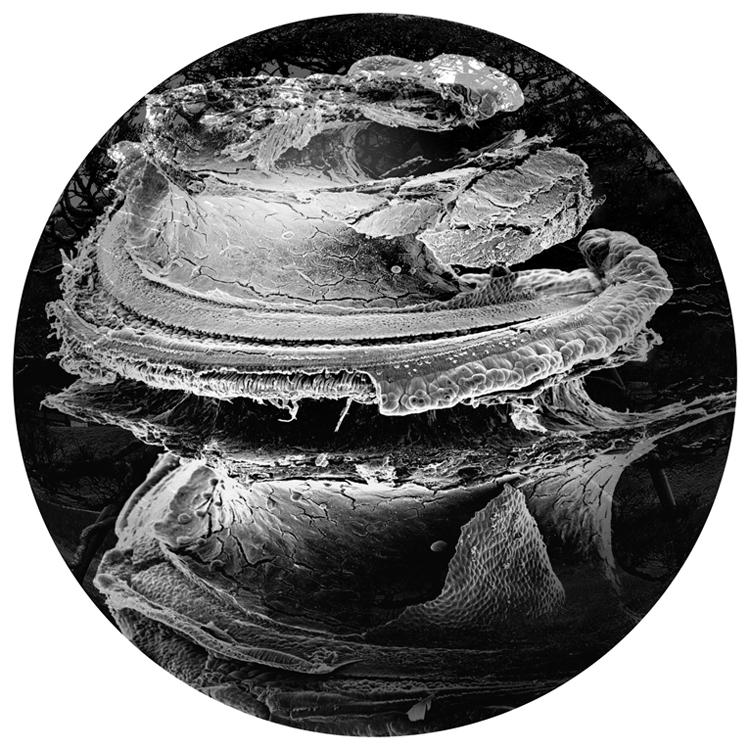 Patricia-Olynyk_Sensing-Terrains_NAS_13_Imprint.jpg