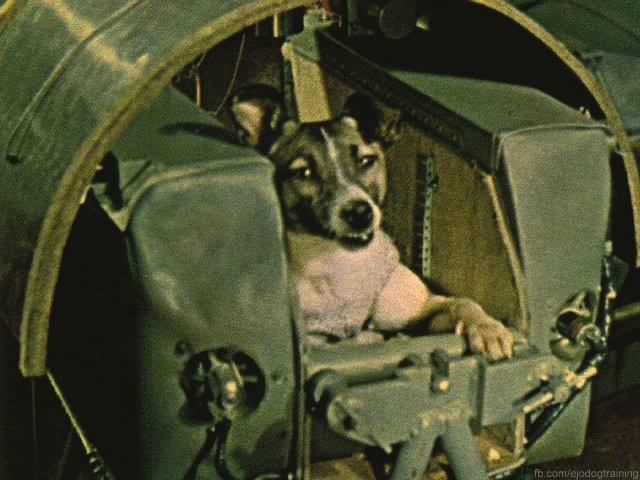 •On October 4, 1957, the Soviet Union launched Sputnik 1, which became the first satellite to circle earth. About a month later, on November 3, 1957 Sputnik 2 launched carrying in it the first living creature to orbit the earth – a dog named Laika.