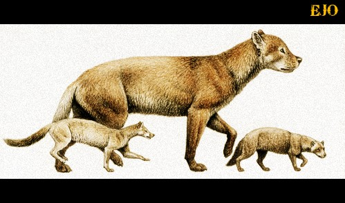• All dogs can be traced back 40 million years ago to a weasel-like animal called the Miacis which dwelled in trees and dens. The Miacis later evolved into the Tomarctus, a direct forbear of the genus Canis, which includes the wolf and jackal as well as the dog.