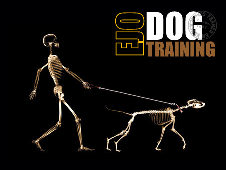 A dog has 319-321 bones in its body! These are made up of essential nutrients and store vitamins and minerals. The canine skeletal system provides stability, allows movement, protects the vital organs and various other functions including t  he force at which its muscle can be used. Us humans contain 206 bones which peak in density around age 30. In essence, the bigger and more dense the bone, the stronger the animal.