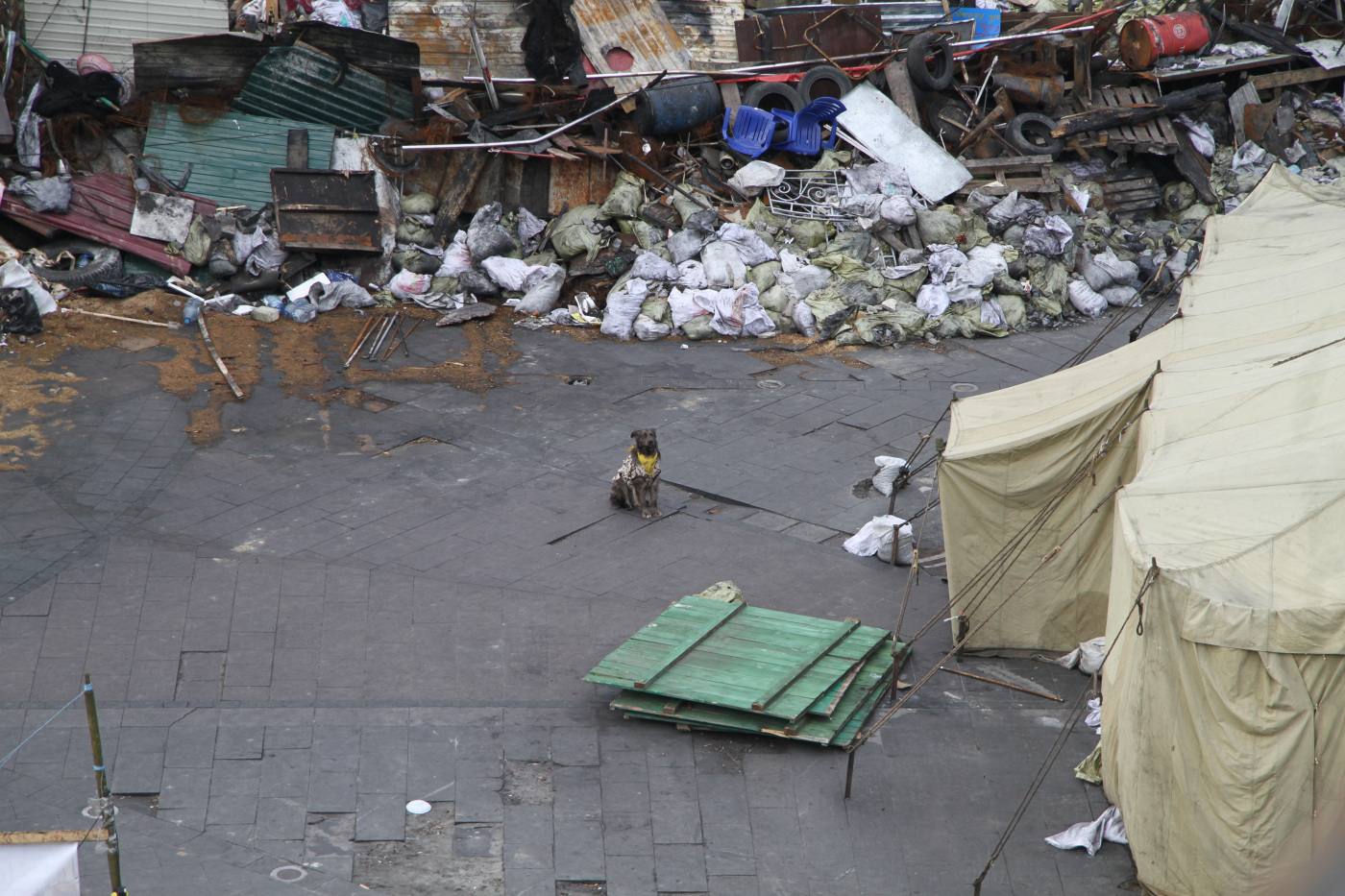 A dog sits amidst trash barriers in Maidan Nezalezhnosti, epicenter of the Euromaidan protests in Kiev, Ukraine. (2014, Medium)