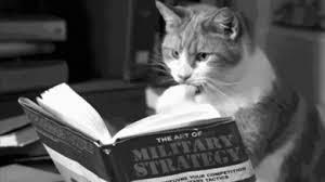 Cat preparing for war.jpg
