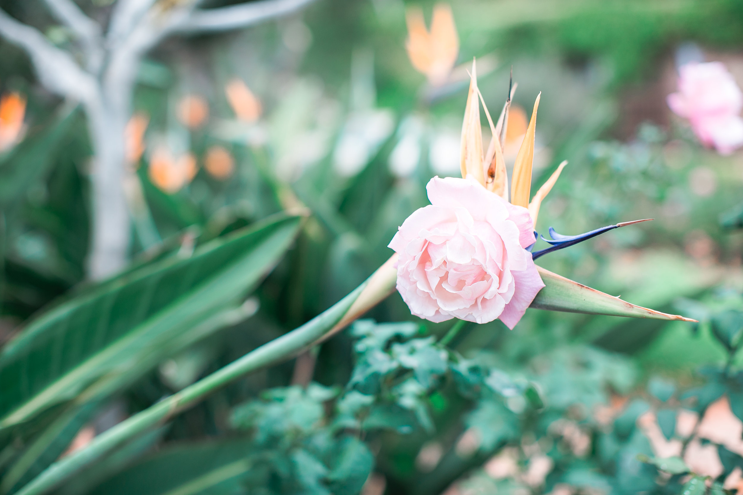 The garden right behind the chapel blooms the most beautiful flowers. Perfect touch to a perfect celebration.