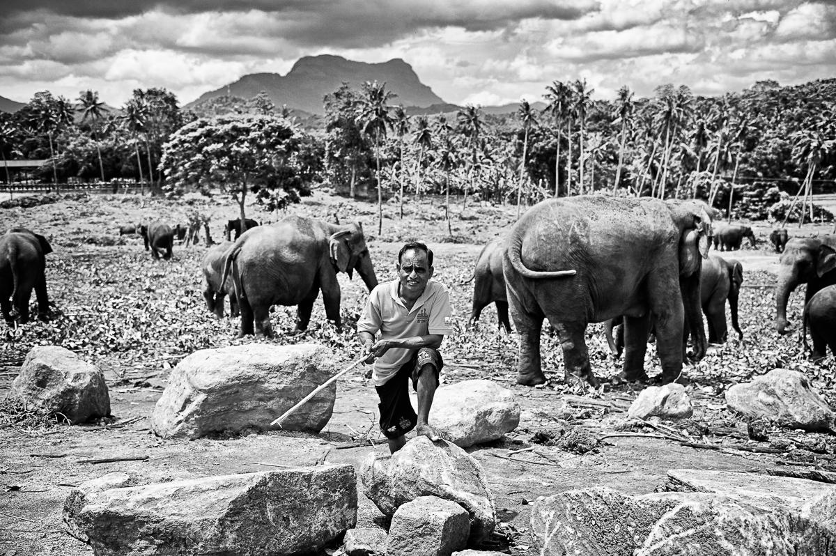 120608SL Pinnawela Elephant Orphanage-126 mono.jpg