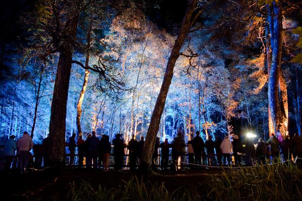 enchantedforrest.jpg