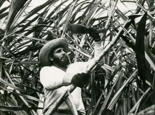 Fidel In The Sugar Can Fields  Alberto Korda  Fidel Castro, Sugar Cane Fields, 1950s  Gelatin Silver Print, VINTAGE  4 x 5 in.