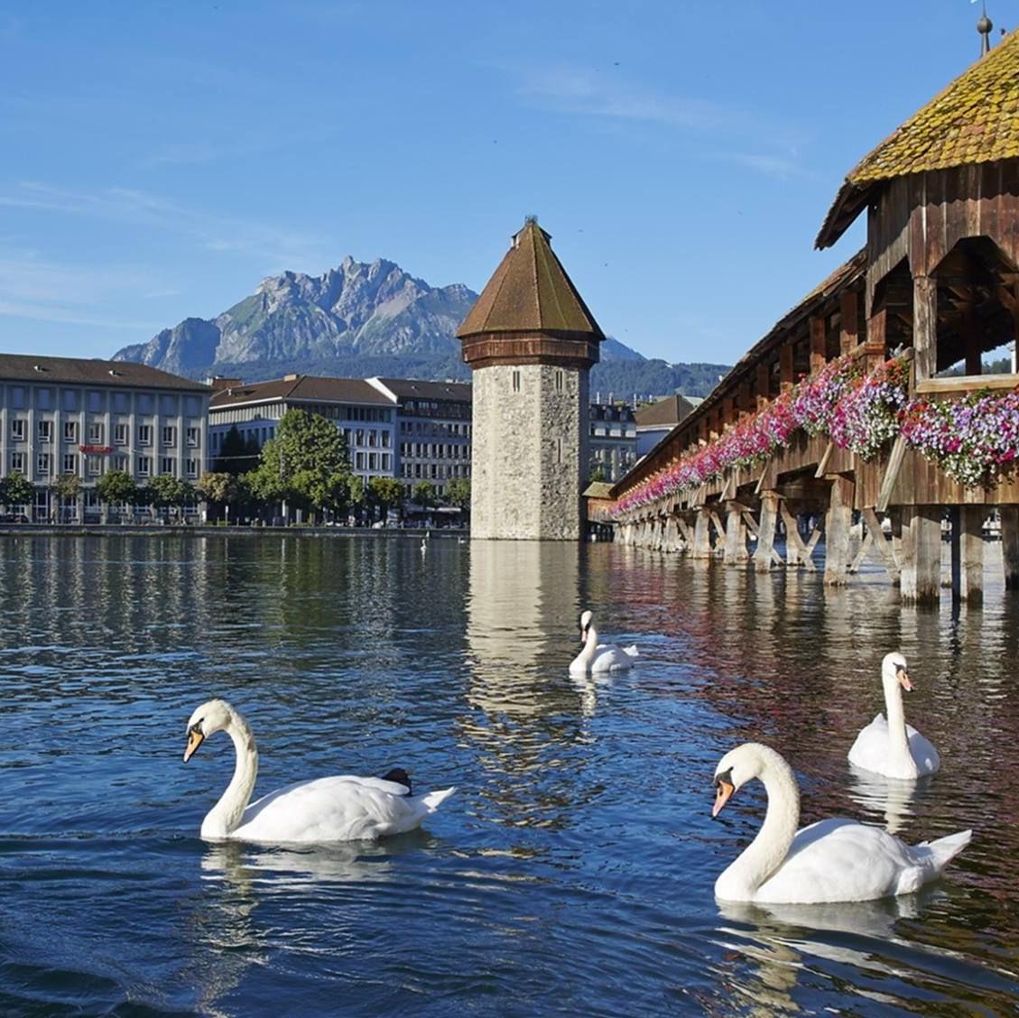 lucerne and swans (3).jpg