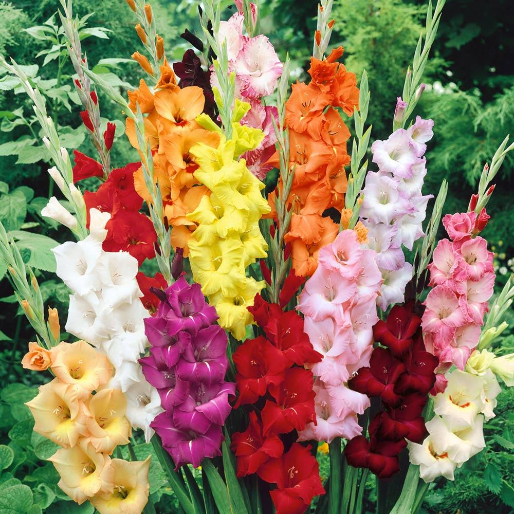 gladiolus bouquet.jpg