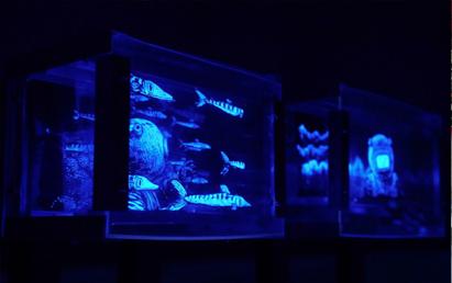 EXPOSITION JIM CURIOUS (NUIT)
