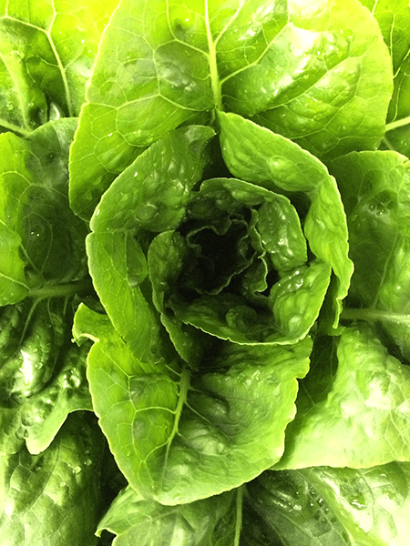 romaine-closeup.png