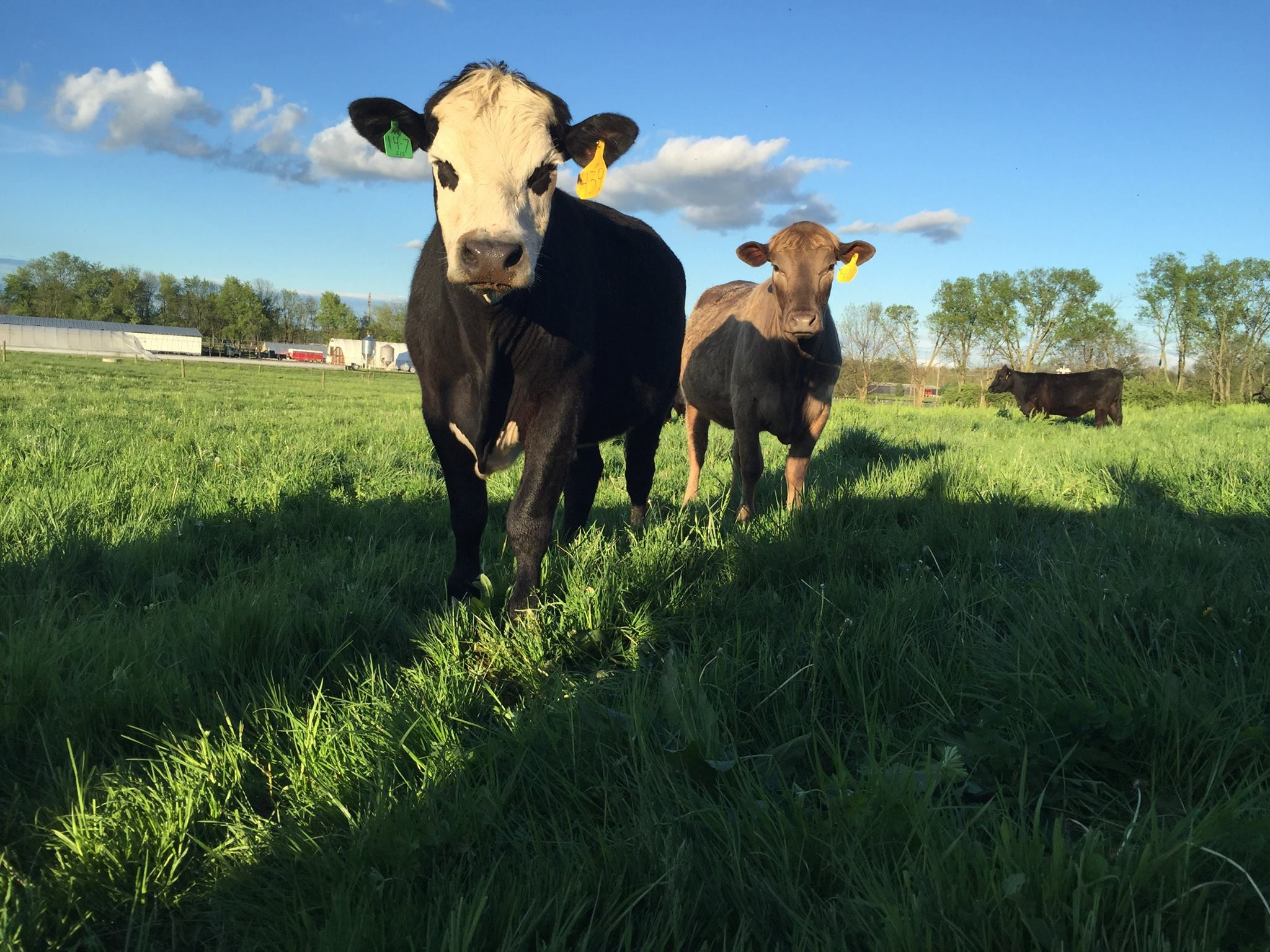 clarkfamilyfarm-biweekly-beef.jpg