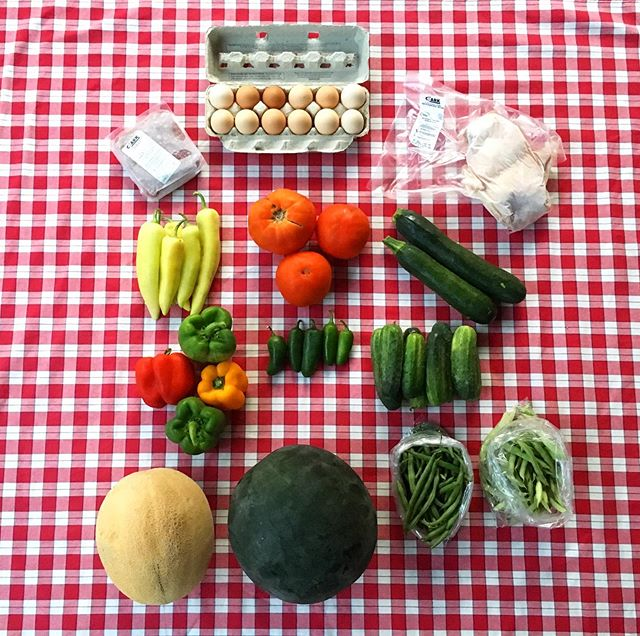 Our week twelve shares are here! This weeks full share has double melon! green & red peppers, banana peppers, slicer tomatoes, zucchini, jade and half runner green beans, jalapeños and pickler cucumbers! Thank you to Clark Family Farm, their beef, chicken and eggs are going out to members this week! Thank you to Rolling Blue Farm for their fresh saltwater shrimp. We look forward to seeing y'all tomorrow! #TealTractorCSA #notill #sustainableagriculture #kentuckyproud #kyag365 #csa