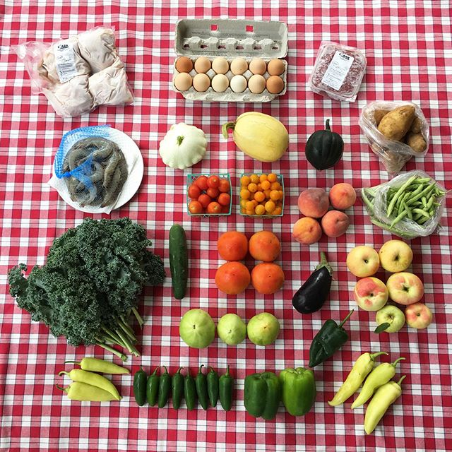 Our week thirteen shares are here! This weeks full share has green bell peppers, poblano peppers, banana peppers, green & red slicer tomatoes, half runner green beans, jalapeños, slicer cucumbers, patty pan squash, spaghetti squash, acorn squash, potatoes, kale, eggplant, red and orange cherry tomatoes, peaches, and zestar apples! Thank you to Clark Family Farm, their beef, chicken and eggs are going out to members this week! Thank you to Rolling Blue Farm for their fresh saltwater shrimp. We look forward to seeing y'all tomorrow! #TealTractorCSA #notill #sustainableagriculture #kentuckyproud #kyag365 #csa