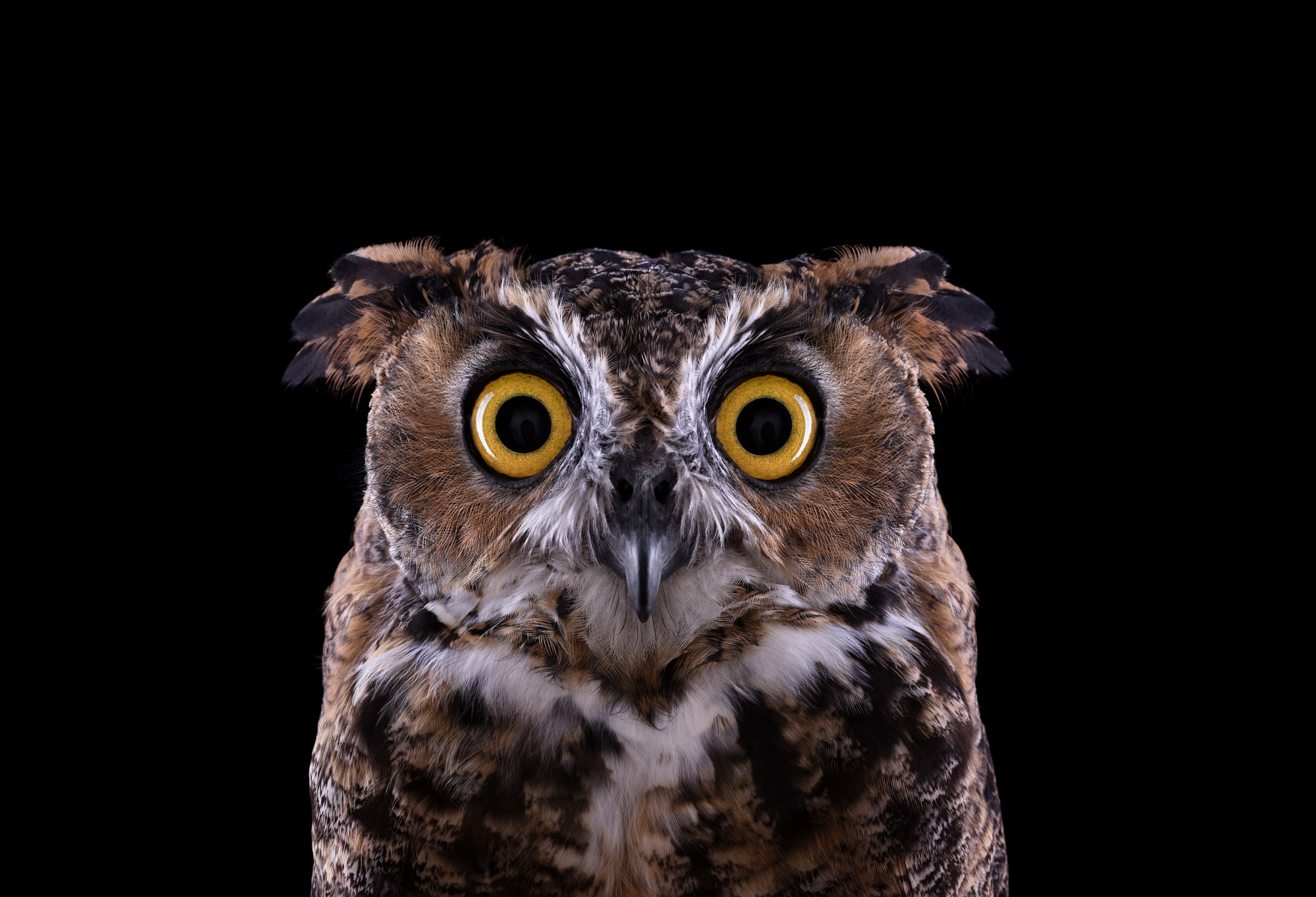 Great Horned Owl #3, Espanola, NM, 2011 by Brad Wilson
