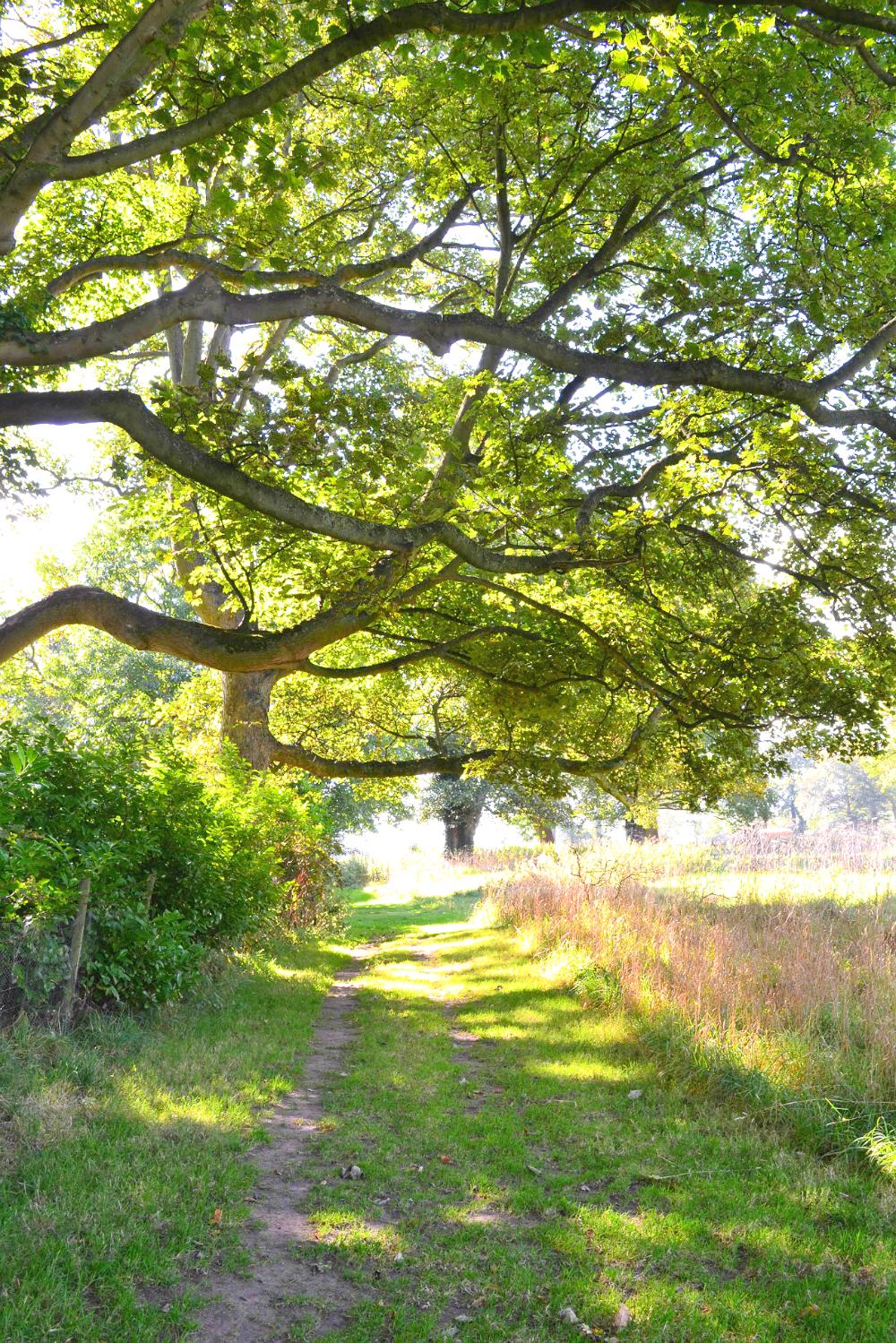 The Ordinary Lovely: Six Feet A Walking