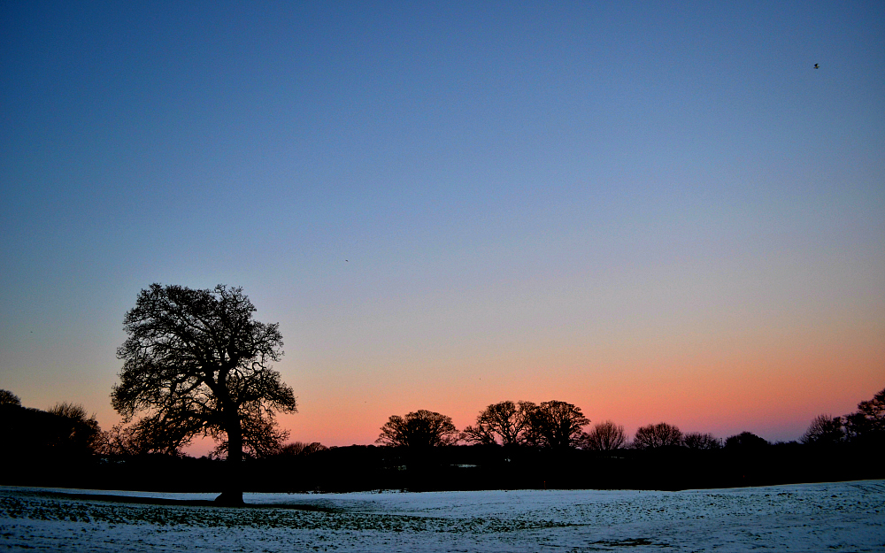 The Ordinary Lovely: Winter mornings