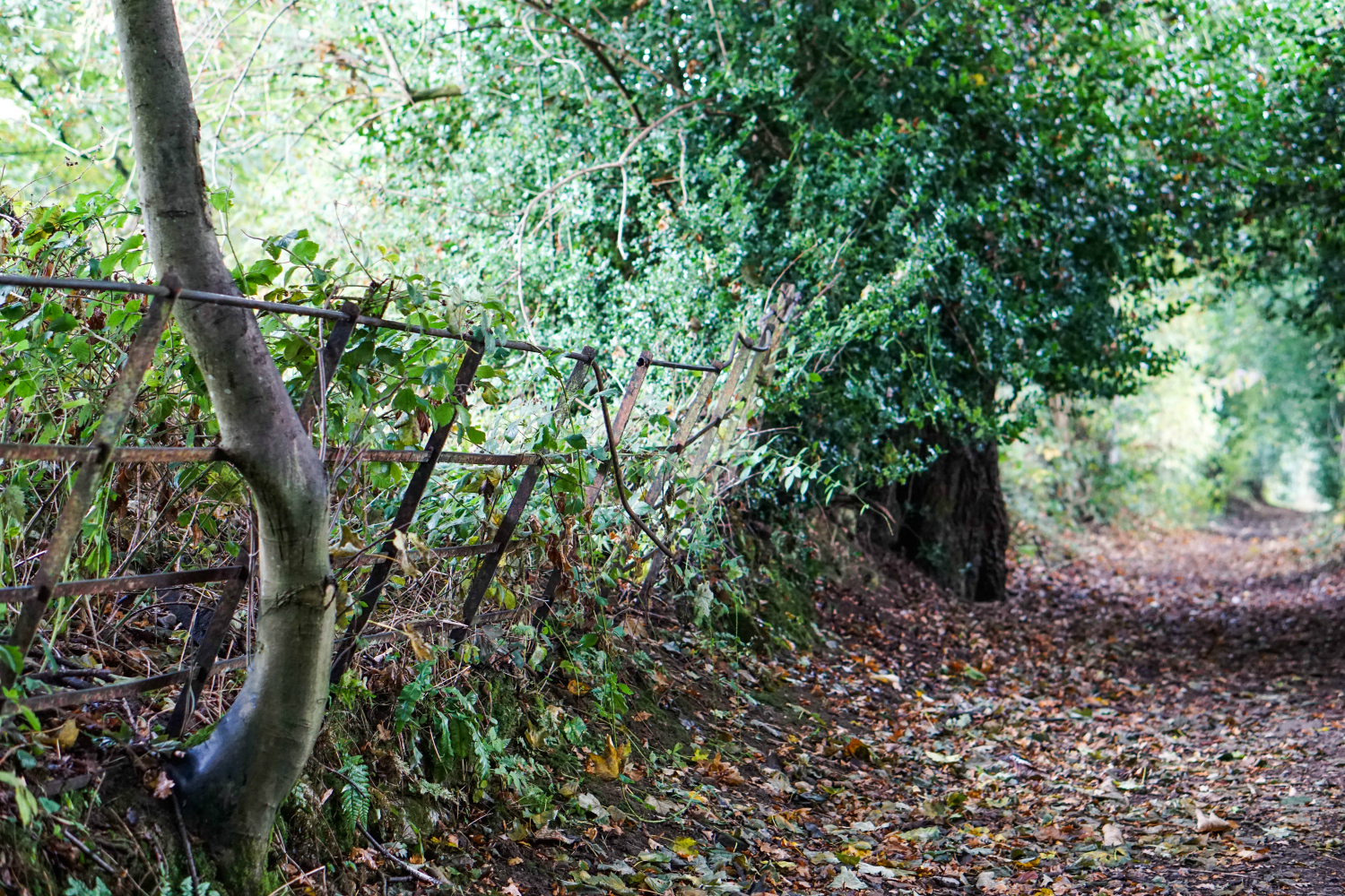 The Ordinary Lovely: North Wales in Autumn