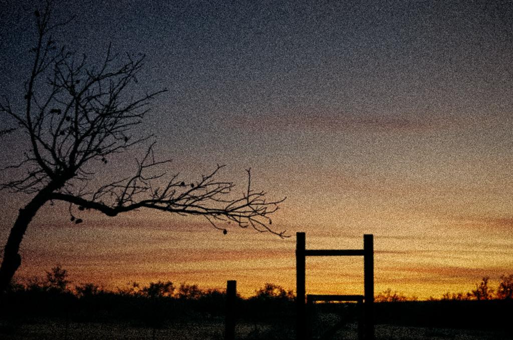 RanchDuskTree.jpg