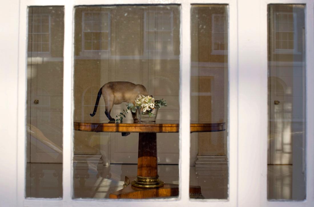Cat+Vase.jpg