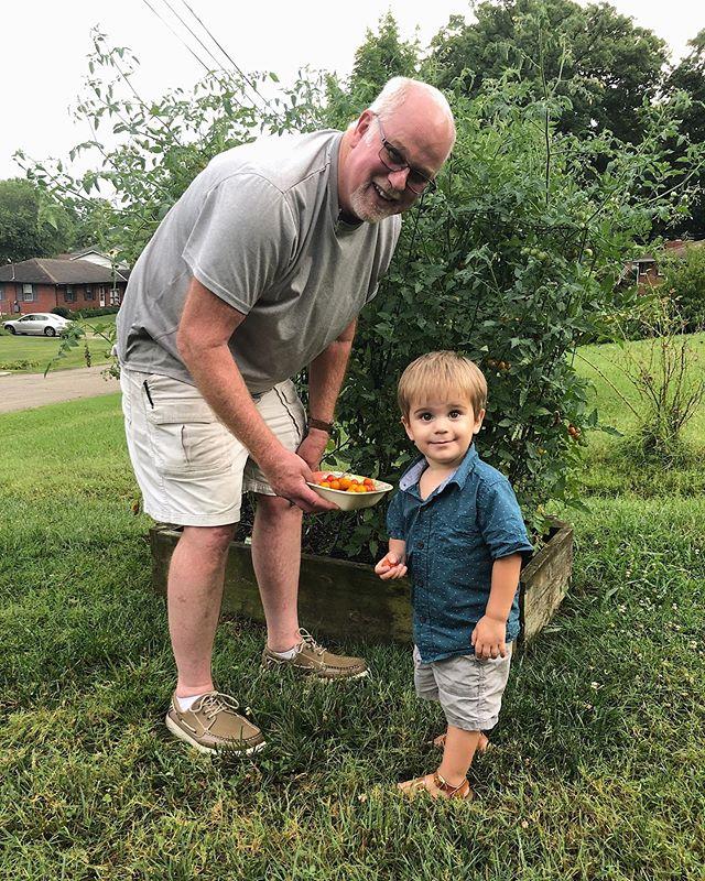 Grandpa & Duke picking some tomatoes 🤩
