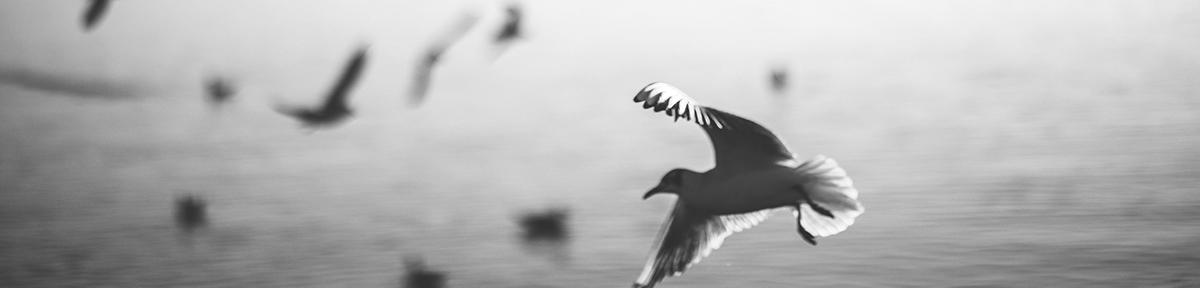 single bird.jpg