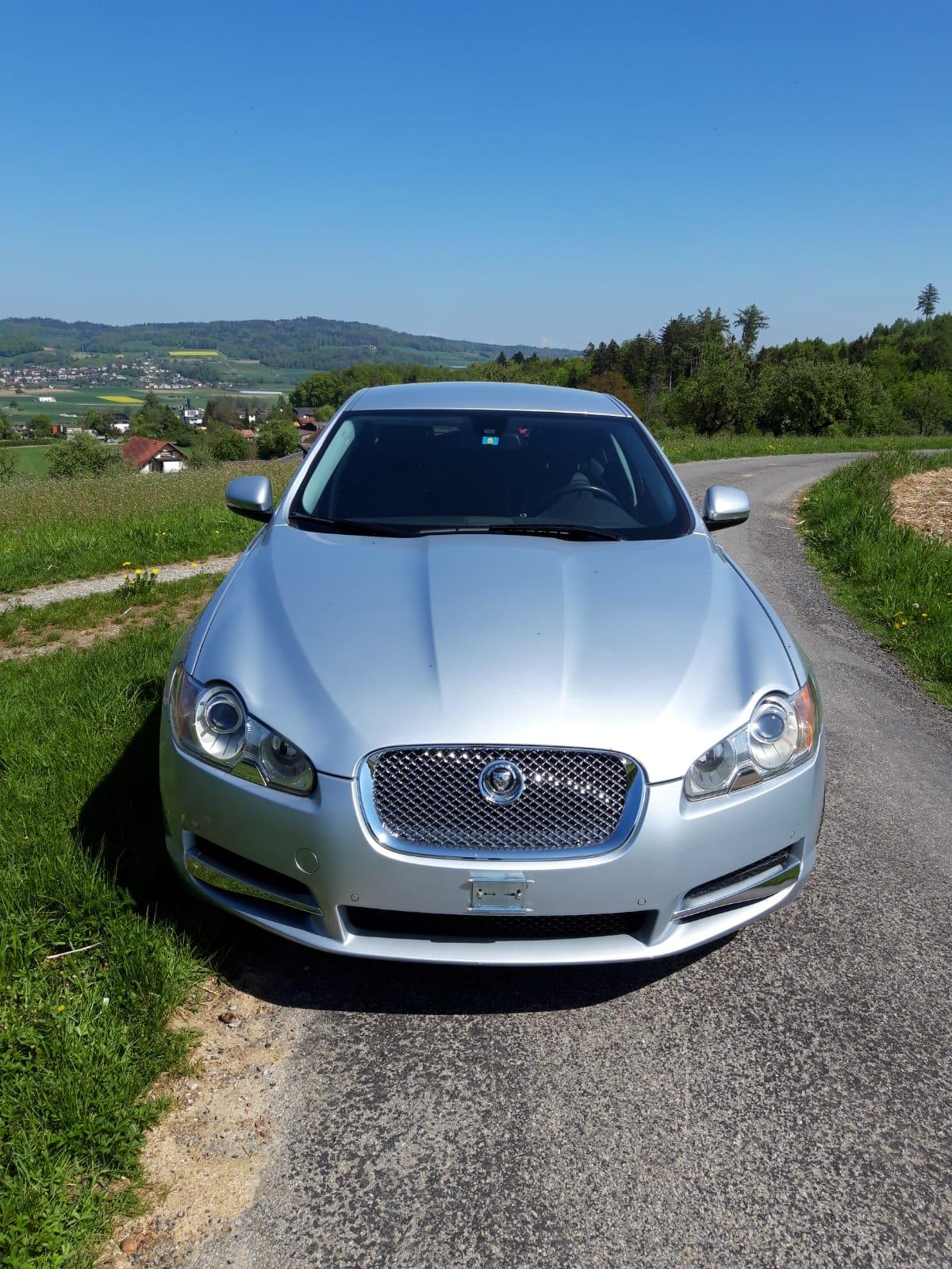 Jaguar5.JPG